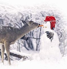 Deer and snowman. The snowman looks angry Animals And Pets, Funny Animals, Cute Animals, Snowmen Pictures, Animal Pictures, Funny Pictures, Animals Photos, Snow Scenes, Winter Scenes