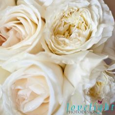 Up close to these gorgeous ivory and cream roses
