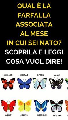 Qual è la Farfalla Associata Al Mese in Cui sei Nato? Scoprila e Leggi cosa Vuol Dire!