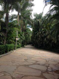 Inhotim, jardim botânico.