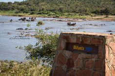 A truly spectacular site as multiple breeding herds descend on Kruger's Olifants River for an elephantastic pool party!Read more › Kruger National Park, Wild Animals, Thought Provoking, Safari, Photo Galleries, Wildlife, African, Names, River