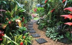 Create a Tropical Garden Landscape Design - Tropical Balinese garden Ideas, tips, photos. Inspire your tropical landscaping. Small Tropical Gardens, Tropical Plants, Garden Cart, Garden Beds, Garden Cottage, Tropical Landscaping, Garden Landscaping, Landscaping Ideas, Glasgow