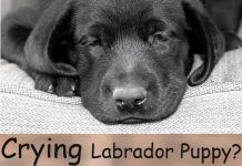 Stop Your Puppy Crying – Great Tips For Settling New Puppies Day & Night