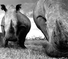 David Yarrow face to face with nature – in pictures