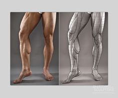 Key anatomy features, block-outs, secrets, and proportion charts of the human figure. Leg Muscles Anatomy, Leg Anatomy, Anatomy Poses, Muscle Anatomy, Anatomy Art, Gross Anatomy, Anatomy Study, Leg Reference, Body Reference Drawing