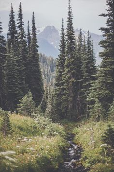 New Photography Nature Forest Wilderness Ideas Landscape Photos, Landscape Photography, Nature Photography, Camping Photography, Photography Aesthetic, Mountain Photography, Photography Flowers, Photography Ideas, Nature Sauvage