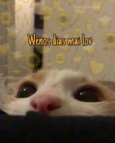 Memes Humor, Cat Memes, Funny Memes, Romantic Memes, Cute Love Memes, Pinterest Memes, Spanish Memes, Wholesome Memes, Love Phrases