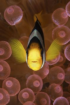 Anenome anenome by Oceansense Productions, via Flickr