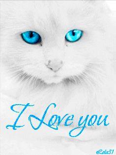 Белая кошка с голубыми глазами( I love you)