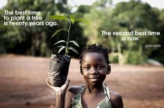 The Best Time to Grow A Tree