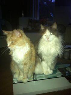 Een laatste foto van de broers samen.