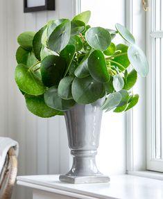 Green Interior Design, Home Greenhouse, Inside Plants, Special Flowers, Vases Decor, Growing Plants, Planting Succulents, Houseplants, Indoor Plants