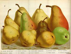 Adaptable Van Houtte Cosmanthus Grandiflorus 1845 Flore Des Serres Lithograph