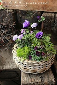 Container gardening is a fun way to add to the visual attraction of your home. You can use the terrific suggestions given here to start improving your garden or begin a new one today. Your garden is certain to bring you great satisfac Green Flowers, Diy Flowers, Flower Pots, Beautiful Flowers, Deco Floral, Arte Floral, Indoor Gardening Supplies, Container Gardening Vegetables, Garden Planters