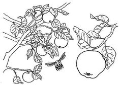 apple tree apple tree and a bee coloring page - Apple Tree Coloring Page