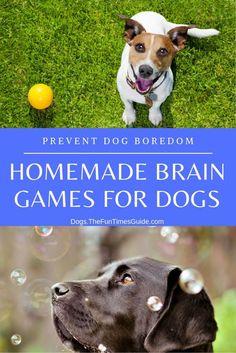 Brain Games For Dogs, Dog Games, Brain Training, Training Your Dog, Pitbull, Dog Boredom, Dog Enrichment, Diy Dog Toys, Pet Toys