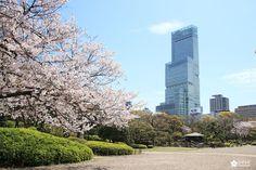Building Abeno Harukas au Sud de Tennoji Rue Pietonne, Kyoto, Les Cascades, Osaka Japan, Skyscraper, Multi Story Building, Design Jardin, Decoration, Gardens