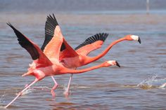 I will see flamingos (yes, really) on the Mediterranean coast.
