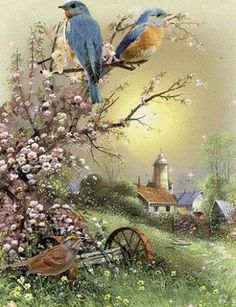 The nest is ready. Now we enjoy nature - Madison Home Beautiful Gif, Beautiful Paintings, Beautiful Birds, Beautiful Pictures, Vogel Gif, Gif Bonito, Beau Gif, Spring Birds, Bird Pictures