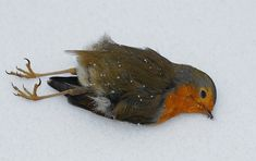 dead bird - Google Search