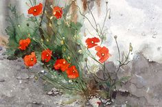 Wild poppies growing out of a wall, Watercolour Giclée print. £60.00, via Etsy.