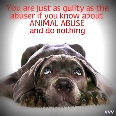 Always Speak Up and Speak Out against Animal Abuse, We are their Voice!