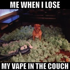 Things that make you go AWW! Like puppies, bunnies, babies, and so on. A place for really cute pictures and videos! Vaping, Dog Pictures, Funny Pictures, Vape Memes, I Quit Smoking, Vape Tricks, Facial Recognition, Vape Shop, Electronic Cigarette