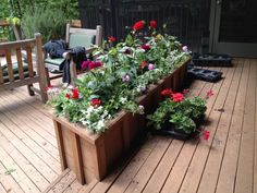the box is planted with red and dark red violet dahlias. The cool color of variegated licorice and lavender star verbena makes all that colo...