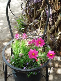 my old chair turned into planter for flowers