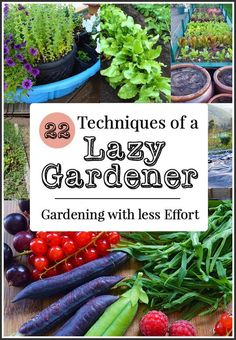 Hydroponic Gardening Ideas How to be a Lazy Gardener: 22 effort saving gardening ideas including tips on how to reduce the need for watering, weeding, and digging - Learn how to successfully garden while saving both time and effort. Organic Vegetables, Growing Vegetables, Growing Tomatoes, Growing Lettuce, Growing Plants, Easiest Vegetables To Grow, Hydroponic Gardening, Hydroponics, Allotment Gardening