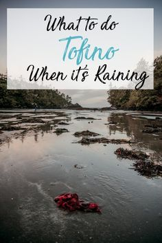 What to do in Tofino When it's Raining. The year round surf town of Tofino, British Columbia located on Vancouver Island sees a lot of rain year round so you likely may end up needing to find some shelter or learning to play in the rain during your visit. Places To Travel, Places To See, Tofino Bc, The Beach People, Belle Villa, Canada Travel, Canada Trip, Canada Eh, Whale Watching