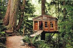 I would love to stay in an extreme tree house!!