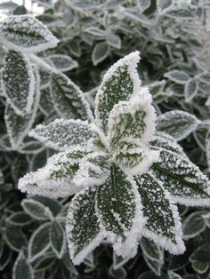 The first frost of the season fell in the Overijssel village of Heino overnight. At the Heino weather station temperatures dropped to -0.5 degrees during the early morning hours of Thursday, Weeronline reports. #OverijsselVillage #WintersFirstFrost #Winter