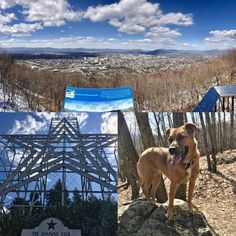 Star Trail Mill Mountain Roanoke VA feat. Remi! #hiking #camping #outdoors #nature #travel #backpacking #adventure #marmot #outdoor #mountains #photography