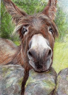 Donkey ACEO ATC burro animal print from by christinewilliams20, £3.00