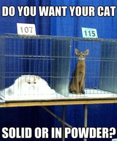 Mommy, I Want the Pile of Cat to Win! - LOLcats is the best place to find and submit funny cat memes and other silly cat materials to share with the world. We find the funny cats that make you LOL so that you don't have to. Memes Chats, Cat Memes, Funny Memes, I Love Cats, Crazy Cats, Cute Cats, Funny Animal Pictures, Funny Animals, Cute Animals