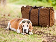 Regeln und Richtlinien für Hunde im Flugzeug – Foto: Shutterstock    www.einfachtierisch.de