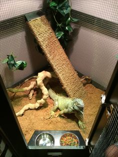 """Spike's """"dinner table"""". Custom cage for our iguana, made by my husband."""