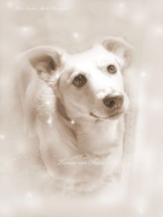 Lorenzo von funzo (I love you so much.) by Mika I. Love You So Much, My Love, Polar Bear, Art Photography, Fine Art, Amazing, Dogs, Animals, Love You Very Much