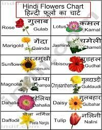Flowers And Names Hindi Language Learning Flower Chart Learn Hindi