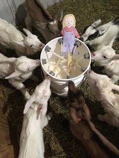 Dairy Goat Farmer Math
