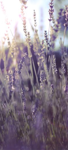 stellarsky on Tumblr #lavender