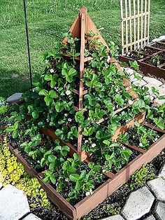 Strawberry tree. My Nanny & Pappy planted their strawberries this way...they would get tons of berries! Which us grandkids would promptly eat most of them! Lol