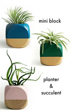 Upgrade your every day with FAB | Shop these adorable hand-painted mini wood colorblock planters and succulents at FAB. Click through for more home new arrivals.