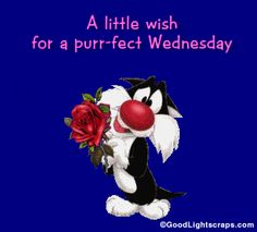 happy wednesday pictures funny | Wednesday Comments, Wednesday Scraps, Wednesday Glitter graphics ...