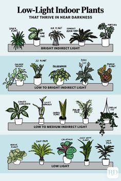 House Plants Decor, Garden Plants, Cactus House Plants, Backyard Plants, Cactus Art, Outdoor Plants, Calathea Plant, Low Light Plants, Low Light Houseplants
