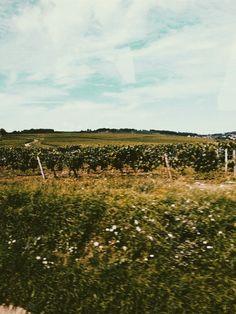 Taizé, France Vineyard, France, Travel, Outdoor, Instagram, Viajes, Outdoors, Destinations, Vineyard Vines