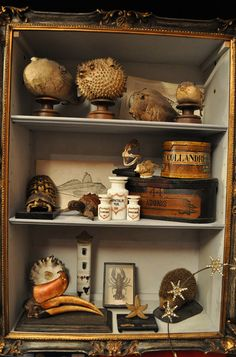 Make a curiosity cabinet out of old frames. Love this! i have a blow fish
