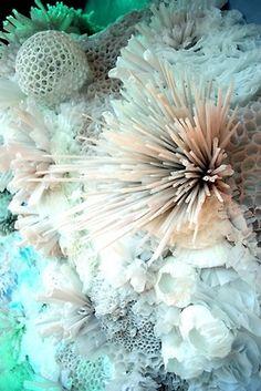 Underwater | Marine Life | Urchin ...