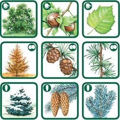 Stromy | Príroda